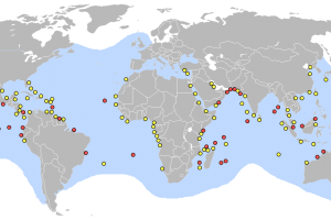 Green sea turtle distribution